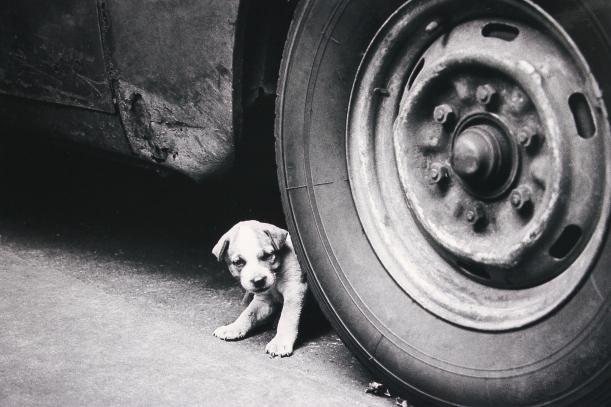Miedo_Perro